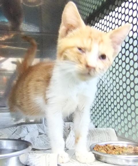 【移動先募集】センター(本所)収容猫(1/23訪問)_f0242002_1447428.jpg