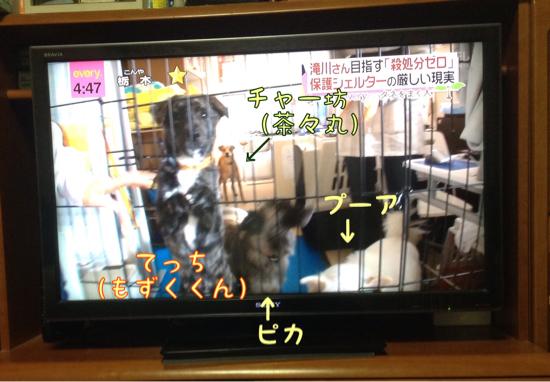 日テレ NEWS everyにて_f0329311_21215746.jpg