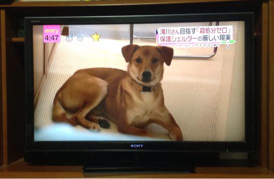 日テレ NEWS everyにて_f0329311_21215812.jpg