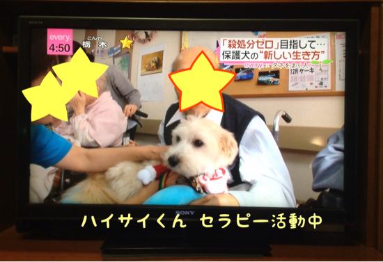 日テレ NEWS everyにて_f0329311_21215874.jpg