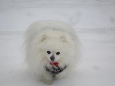 また雪遊びですよ~_b0177436_22105077.jpg