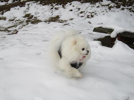 また雪遊びですよ~_b0177436_2220138.jpg