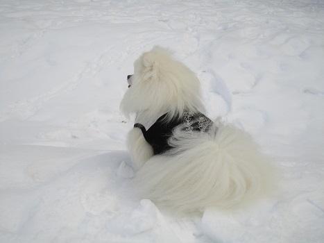 また雪遊びですよ~_b0177436_2226439.jpg