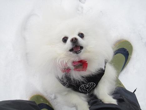 また雪遊びですよ~_b0177436_2253937.jpg