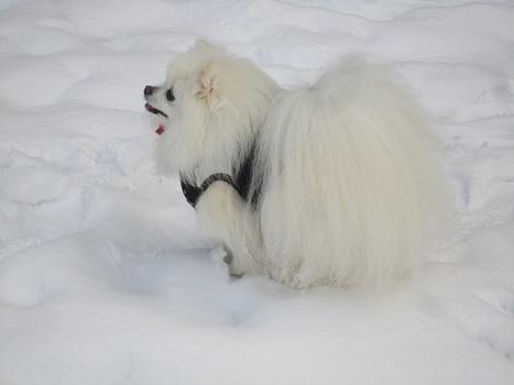 また雪遊びですよ~_b0177436_227988.jpg