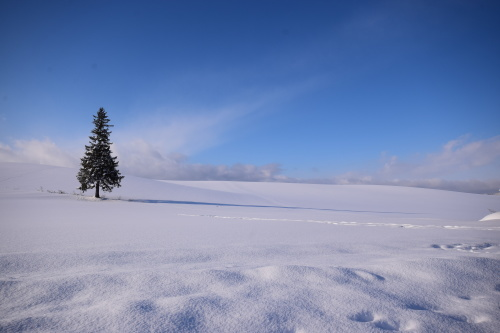 1月の風景_d0285540_21060716.jpg