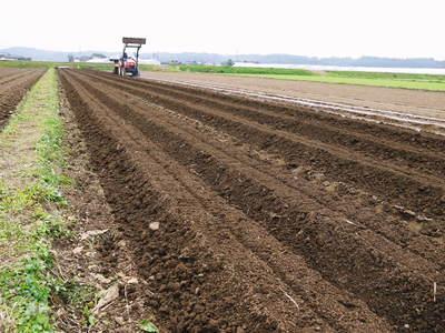 有機栽培の水田ごぼう 土作りから種まき、そして現在の発芽まで(2020) _a0254656_1748171.jpg