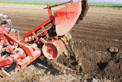 有機栽培の水田ごぼう 土作りから種まき、そして現在の発芽まで(2020) _a0254656_17521775.jpg