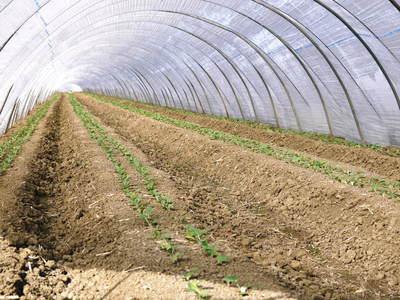 有機栽培の水田ごぼう 土作りから種まき、そして現在の発芽まで(2020) _a0254656_18245264.jpg