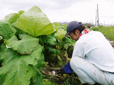 有機栽培の水田ごぼう 土作りから種まき、そして現在の発芽まで(2020) _a0254656_1834079.jpg
