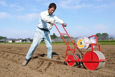 有機栽培の水田ごぼう 土作りから種まき、そして現在の発芽まで(2020) _a0254656_1863755.jpg