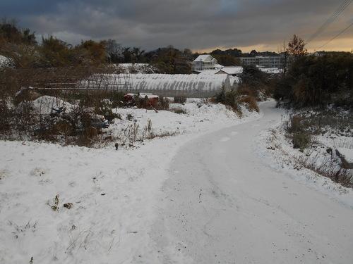 雪が降るとうれしくなる天草人です_e0181260_7532187.jpg