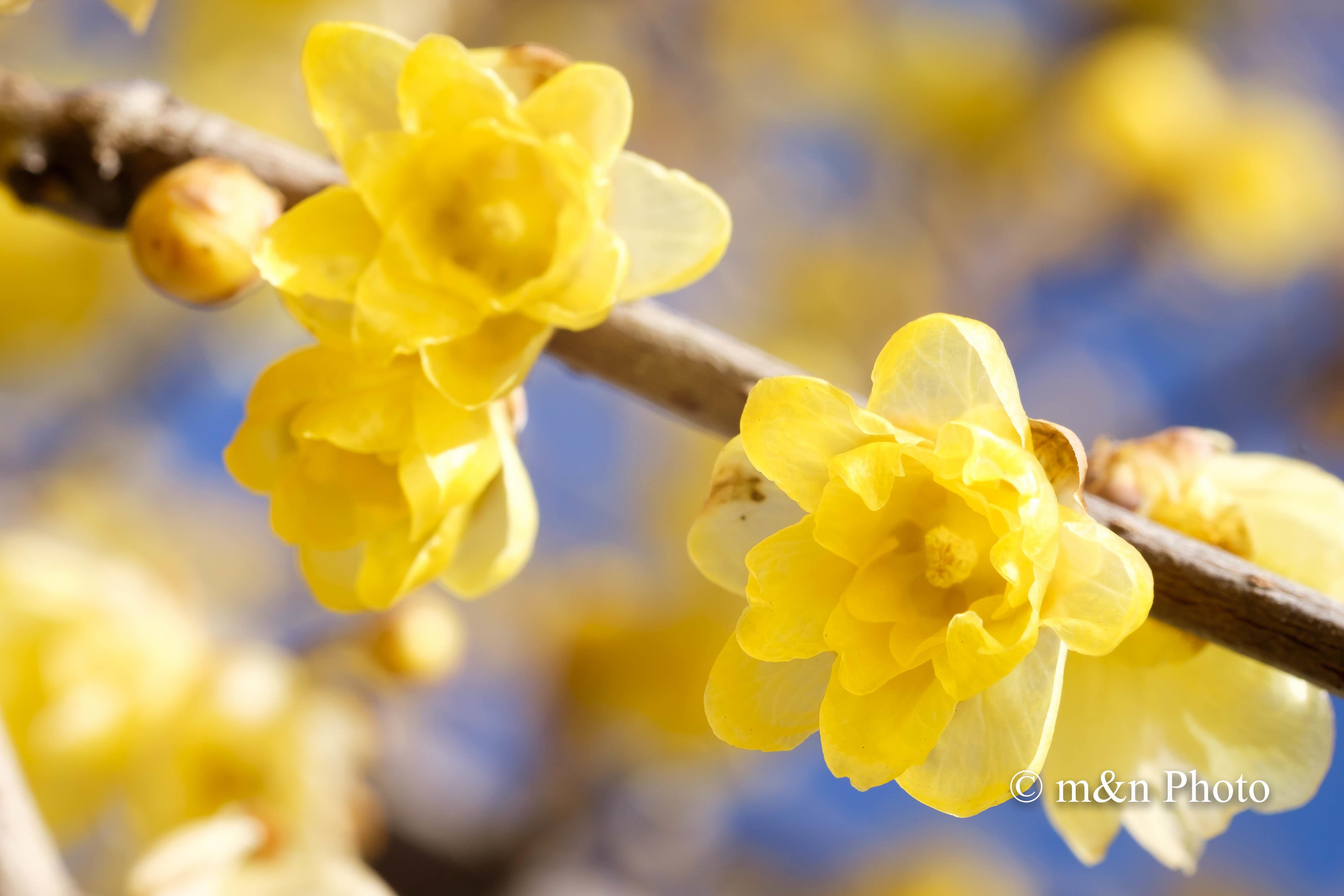 春の香り_e0321360_00105716.jpg