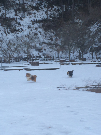 もう雪は嫌だ〜_f0126965_21484426.jpg