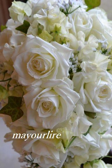 出番を待つお花たち_d0169179_1957415.jpg