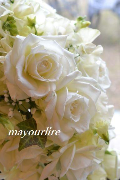 出番を待つお花たち_d0169179_19575283.jpg