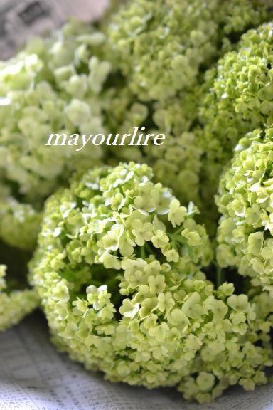 出番を待つお花たち_d0169179_2011885.jpg