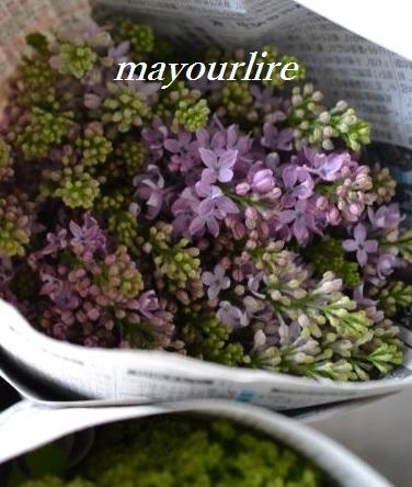 出番を待つお花たち_d0169179_2013979.jpg