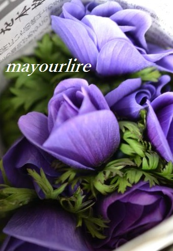 出番を待つお花たち_d0169179_202110.jpg
