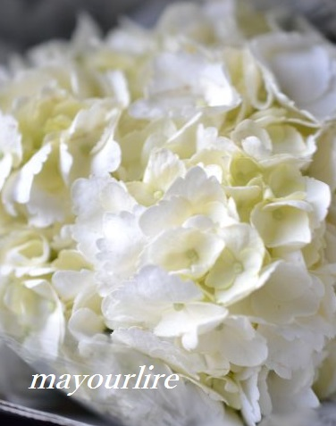 出番を待つお花たち_d0169179_2071048.jpg