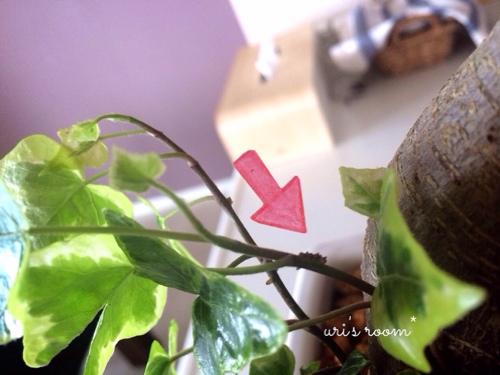 BRUNOホットプレートが可愛い(´∀`)と、今朝めっちゃビビった話。_a0341288_17274859.jpg