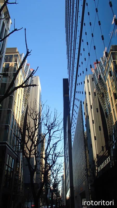 東京旅日記 その4  (ハクチョウ)  2016/01/23_d0146592_0212695.jpg