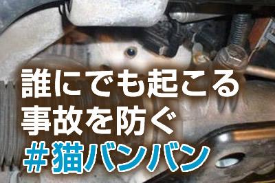 ーー猫!バンバン!運動!って、知ってますか~?ーー_d0060693_1862846.jpg