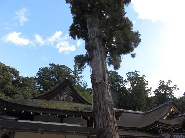 イケメンを見たくて ~大神神社~_f0346196_11565917.jpg
