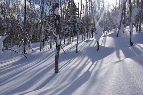 2016年1月23日札幌国際スキー場に近い白井岳支尾根の山を滑る_c0242406_1621679.jpg