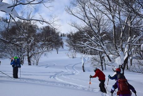 2016年1月23日札幌国際スキー場に近い白井岳支尾根の山を滑る_c0242406_163772.jpg