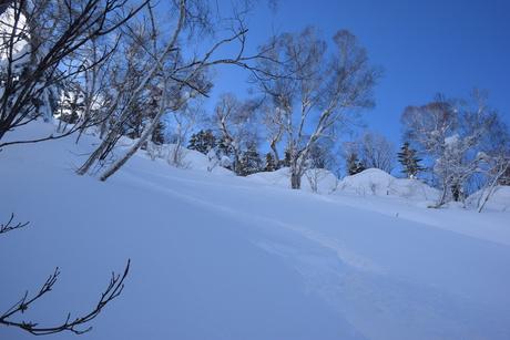 2016年1月23日札幌国際スキー場に近い白井岳支尾根の山を滑る_c0242406_16402737.jpg