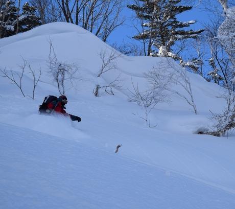 2016年1月23日札幌国際スキー場に近い白井岳支尾根の山を滑る_c0242406_1647332.jpg