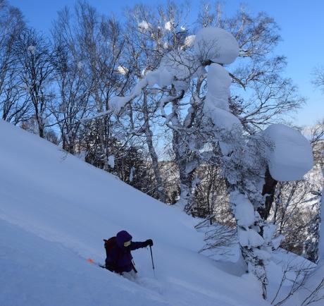 2016年1月23日札幌国際スキー場に近い白井岳支尾根の山を滑る_c0242406_16595715.jpg