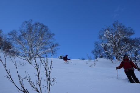 2016年1月23日札幌国際スキー場に近い白井岳支尾根の山を滑る_c0242406_18154716.jpg