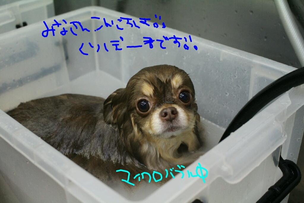 b0130018_20103757.jpg