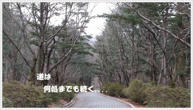 ♪ 冬、旅行・4 ♪_a0115924_01561506.jpg