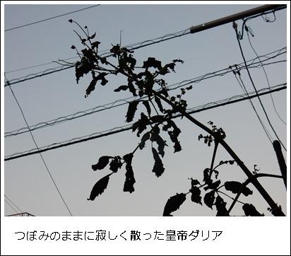e0033229_19111037.jpg