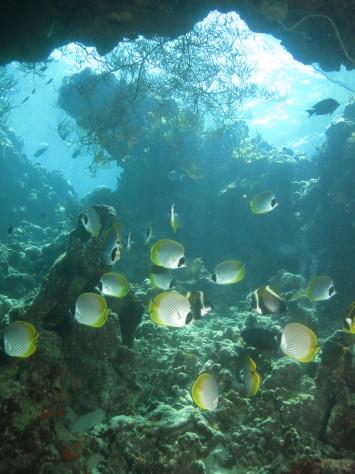 バリ島ツアー報告2日目_c0070933_11461865.jpg