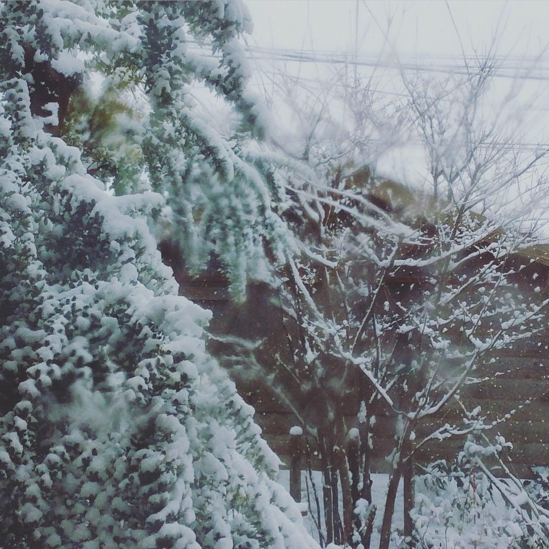 大雪。_b0125443_12583478.jpg