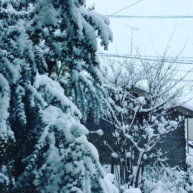 大雪。_b0125443_125848100.jpg
