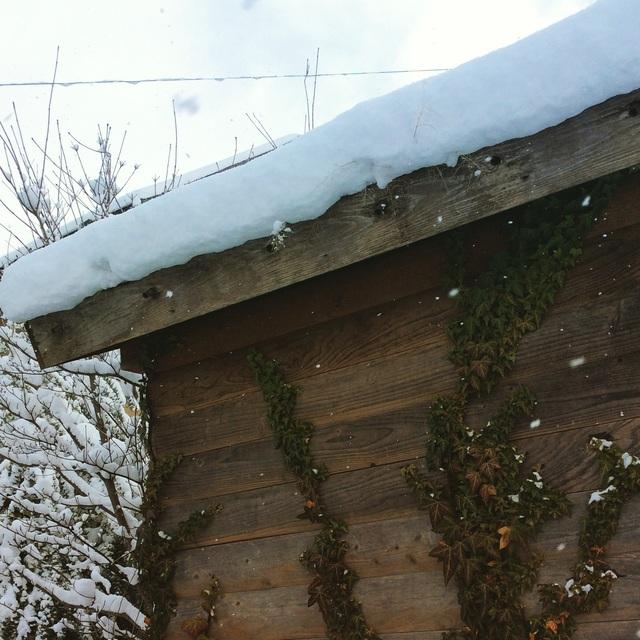大雪。_b0125443_12593199.jpg