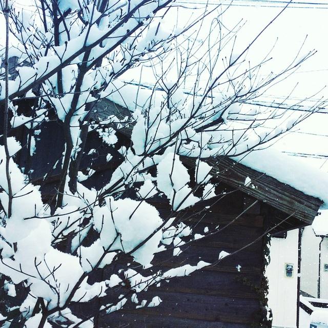 大雪。_b0125443_12594694.jpg