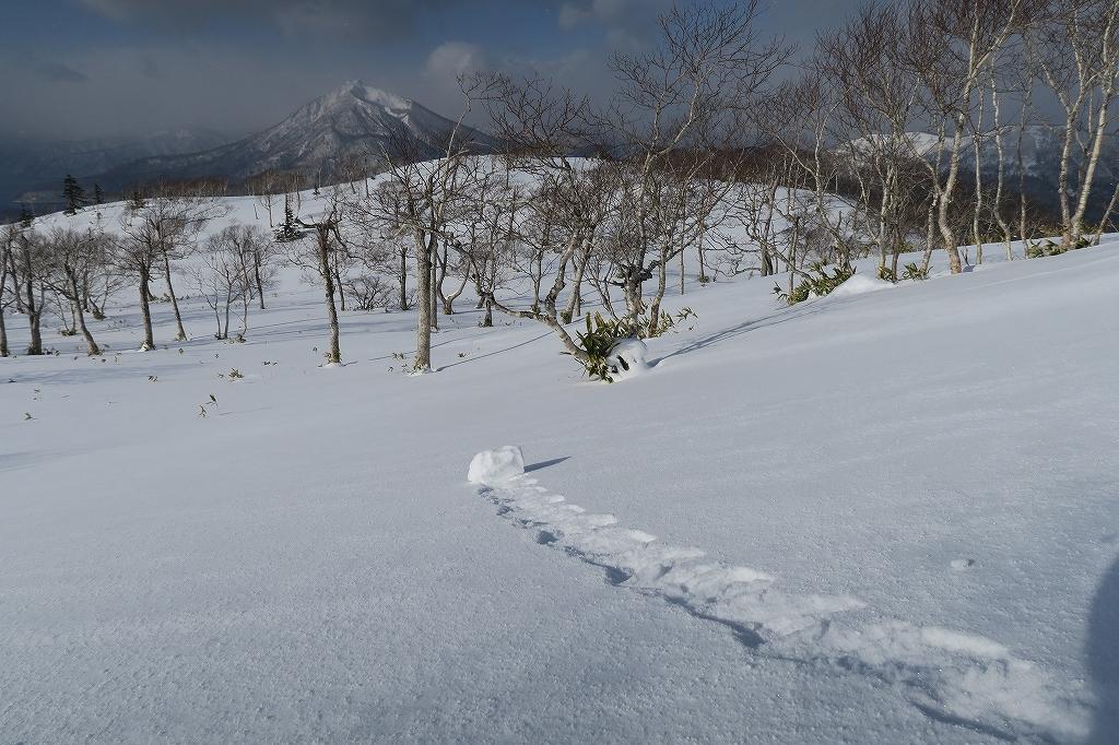 紋別岳から748mピーク、1月27日_f0138096_1232940.jpg