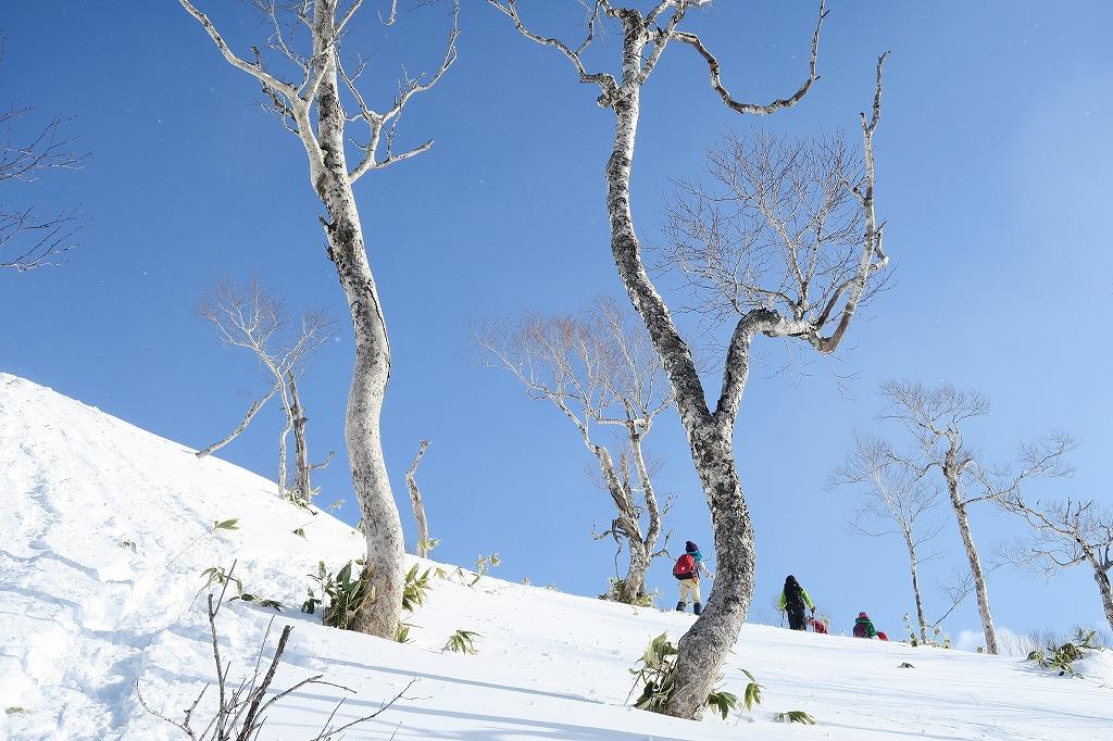 紋別岳から748mピーク、1月27日_f0138096_1243287.jpg