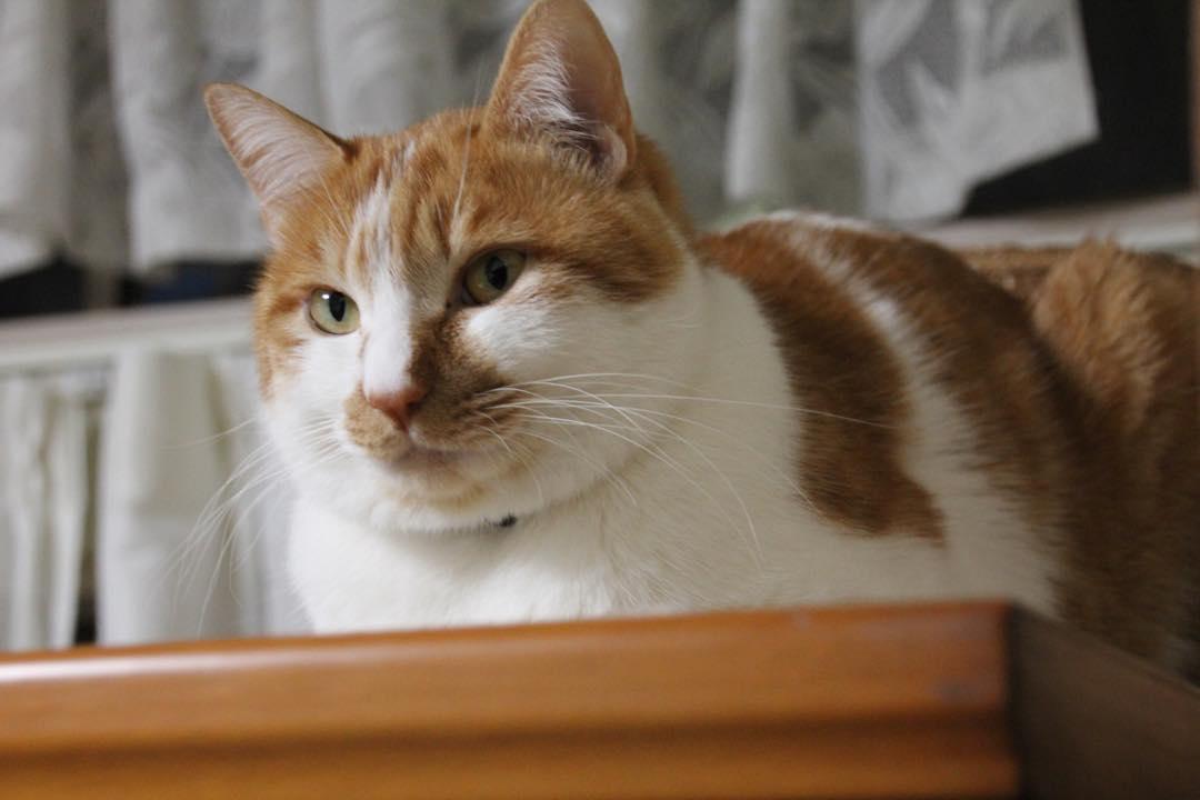【猫】可愛いヤツ_f0141609_23571766.jpg