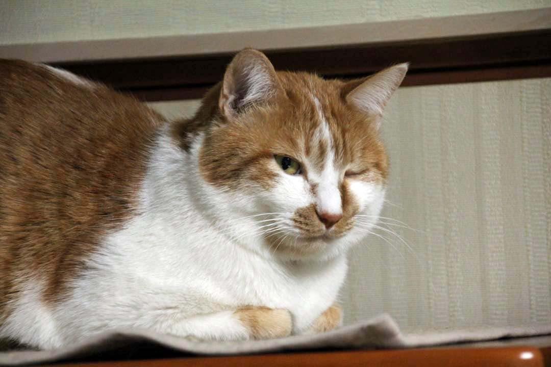 【猫】可愛いヤツ_f0141609_2357193.jpg