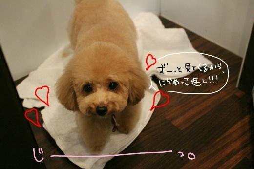 100円shop♪_b0130018_18435082.jpg