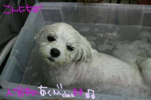 100円shop♪_b0130018_18435333.jpg