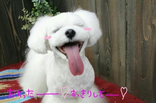 100円shop♪_b0130018_18473257.jpg
