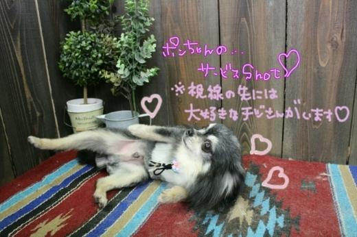 100円shop♪_b0130018_18522508.jpg